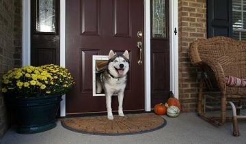 Как защитить деревянные двери от питомцев