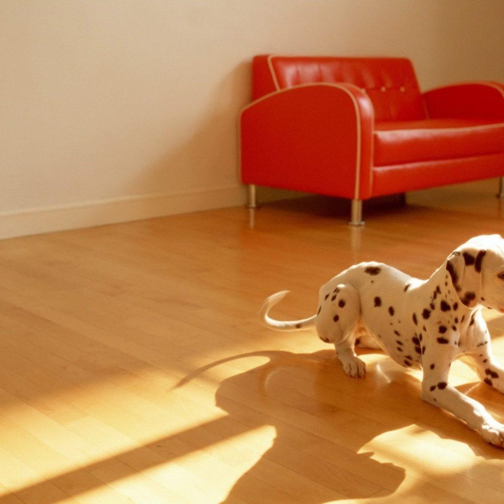 Какой пол лучше выбрать для дома, в котором живут животные (кошки и собаки)